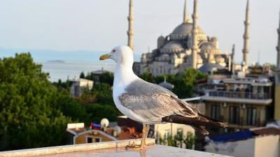 Оферти за Турция