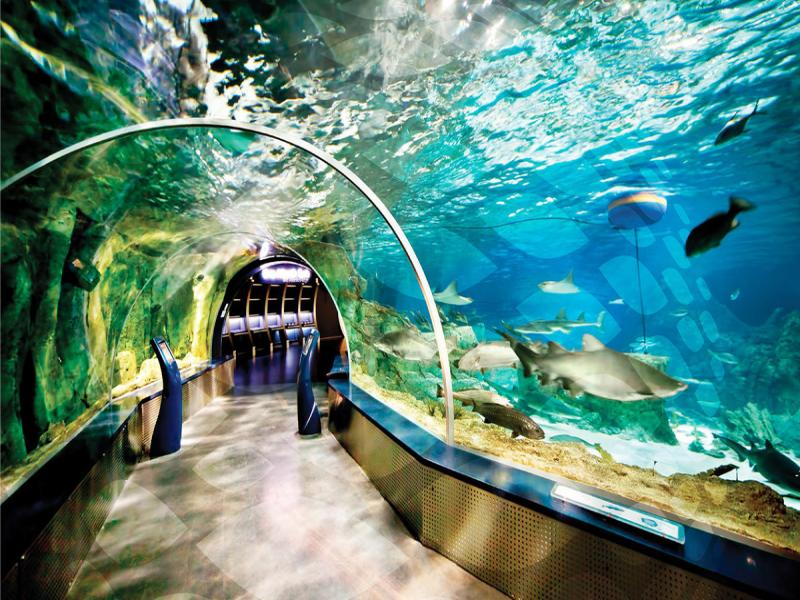 Посещение на аквариум Sea Life