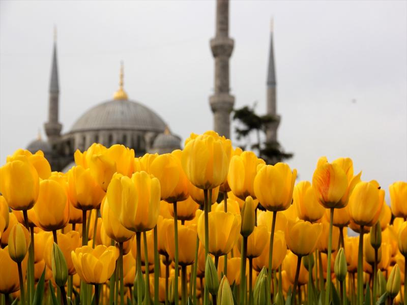 Фестивала на лалето 2019 Истанбул с 3 нощувки