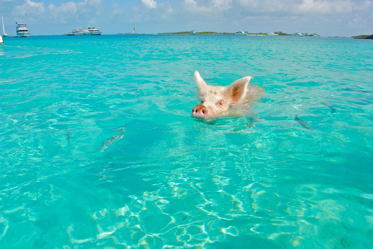 Бахамите - мечтана дестинация на всеки
