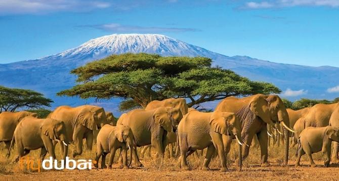 Танзания – девствената красота на дивата природа