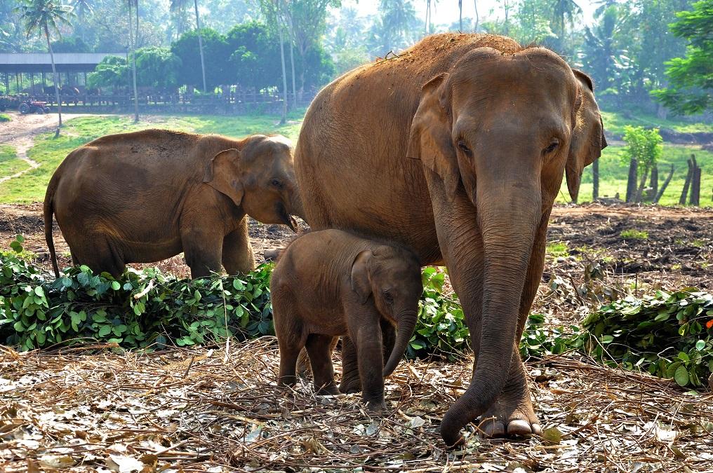 Възхитителната Шри Ланка