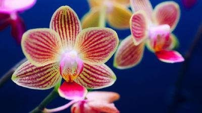 Островът на Орхидеите - Мадейра