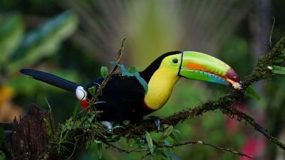Колумбия - Панама - Коста Рика