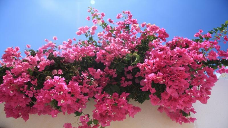 Великден и майски празници в Санторини