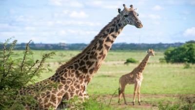 Сафари и почивка в Кения