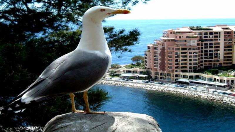Туристическа обиколка в Монако и Ница_