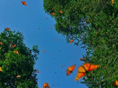 ДРЕВНА ЛИКИЯ и долината на пеперудите