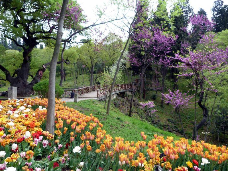 Фестивал на лалетата в Истанбул за ценители