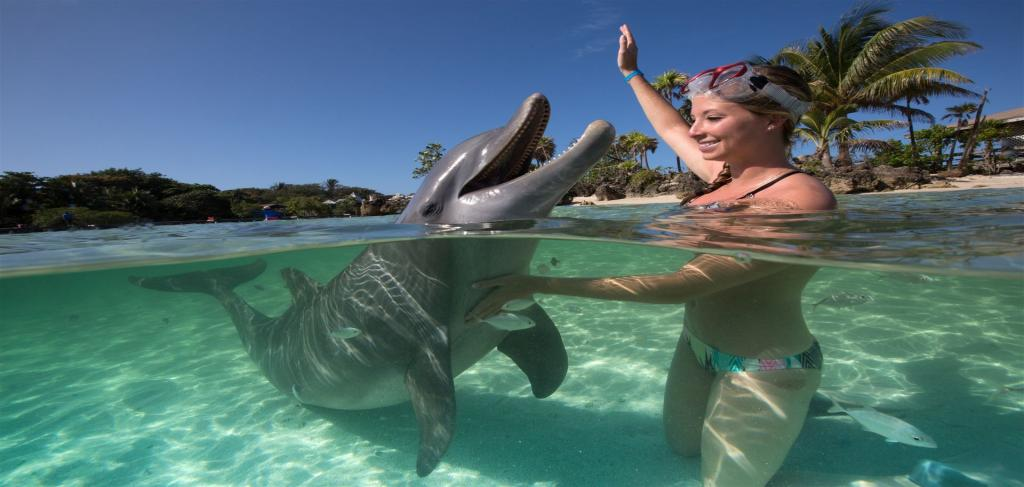 Плуване с делфини и шоу