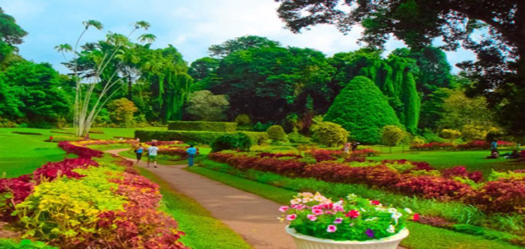 Резултат с изображение за Кралската Ботаническа Градина шри ланка