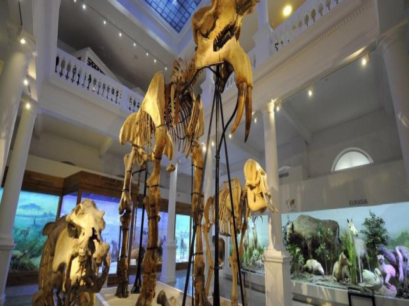 Посещение на Природонаучен музей