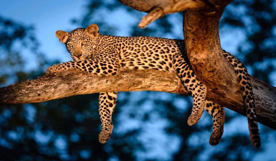 Нощно сафари в джунглата