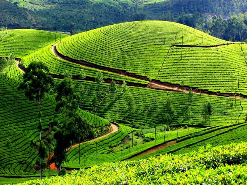 Почивка в Керала, Индия - страната на Създателя