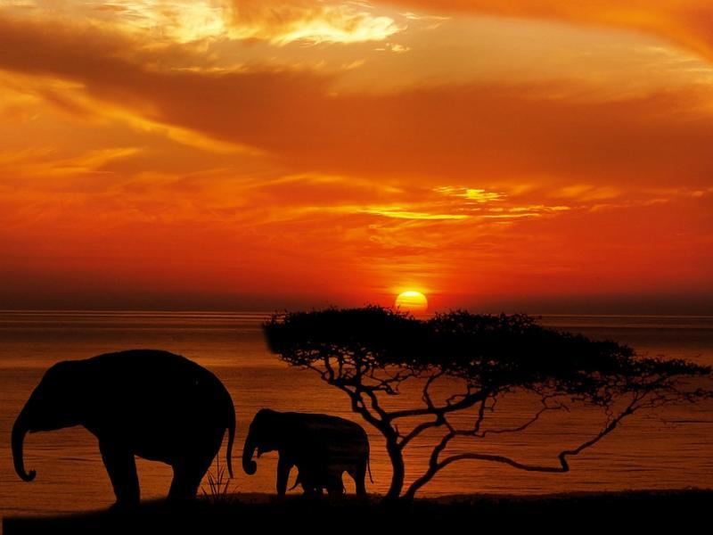 Сафари и екзотична почивка в Кения