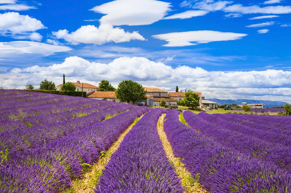 Прованс - един приказен лавандулов свят