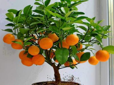 Почивка Испания,  Портокаловият бряг – Коста Азаар 2020